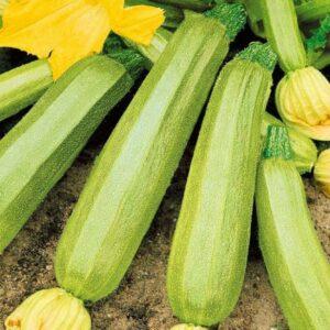 насіння кабачка