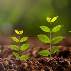 Регулятори та стимулятори росту рослин