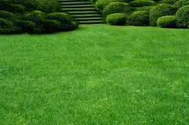насіння газоних трав